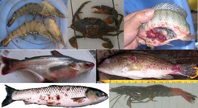 Bệnh học thủy sản – TS Bùi Quang Tề