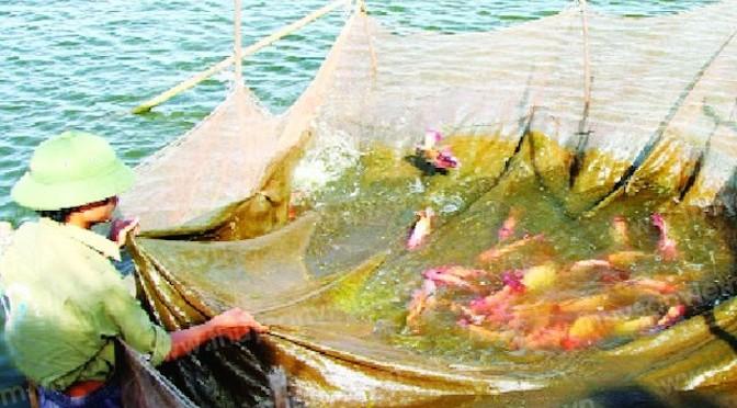 Phòng bệnh tổng hợp cho cá mùa nóng