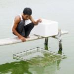 Lưu ý khi nuôi tôm ở độ mặn thấp