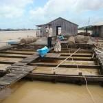 Giảm ô nhiễm môi trường trong nuôi trồng và chế biến thủy sản