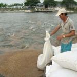 Phòng bệnh cho cá lóc khi thời tiết giao mùa