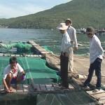 Hoàn thiện quy trình kỹ thuật sản xuất giống cá chim vây vàng