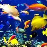 10 loài cá cảnh đắt nhất thế giới