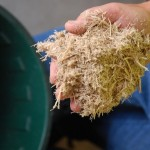 Sử dụng bột bã mía trong nuôi tôm