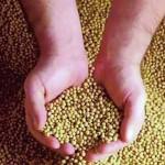 Cách trộn thuốc vào thức ăn trị bệnh cho vật nuôi thủy sản