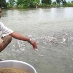 Hành động để cứu cá tra