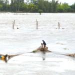 Tầm quan trọng của việc ứng dụng chế phẩm sinh học trong nuôi thủy sản