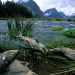 Ô nhiễm khí quyển ảnh hưởng đến chất lượng nước
