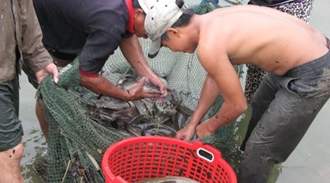 Thành tỷ phú nhờ cá trê lai