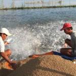 Lựa chọn và bảo quản thức ăn cho cá