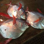 Loài cá nào tiềm năng cho tương lai