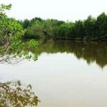 Mô hình nuôi tôm – rừng phát triển bền vững
