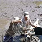 Nuôi cá dìa giúp tăng thu nhập và cải tạo môi trường ao tôm