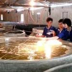 Kết quả thí nghiệm mật độ nuôi cá rô phi kết hợp với tôm thẻ chân trắng