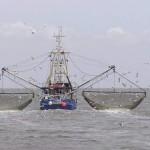 Google đấu tranh chống thủy sản khai thác bất hợp pháp bằng công nghệ mới