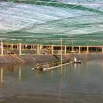 Phát triển mô hình nuôi tôm theo hướng công nghệ cao