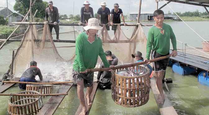 Lối đi nào cho ngành cá tra?