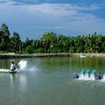 Điều kiện bảo đảm an toàn thực phẩm đối với cơ sở nuôi trồng thủy sản