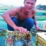 Tỷ phú tôm hùm đảo Lý Sơn