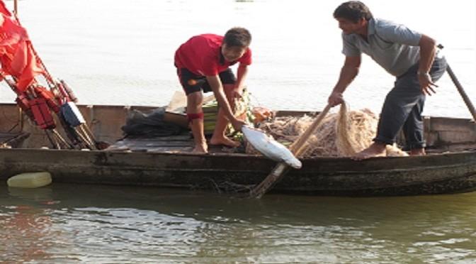 Mùa săn cá 'quý tộc'
