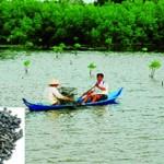 Các giải pháp xử lý ốc đinh trong mô hình nuôi tôm