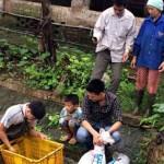 Những điều cần biết cho vụ nuôi cá