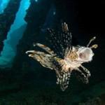 Vẻ đẹp tự nhiên đa dạng dưới đáy Biển Đỏ