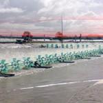 Xây ao lắng trong nuôi tôm công nghiệp: Biện pháp phòng ngừa dịch bệnh tôm nuôi