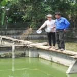 Bình Định: Làm giàu từ nuôi cá và ba ba