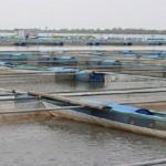 Quy chuẩn kỹ thuật quốc gia về điều kiện nuôi thủy sản