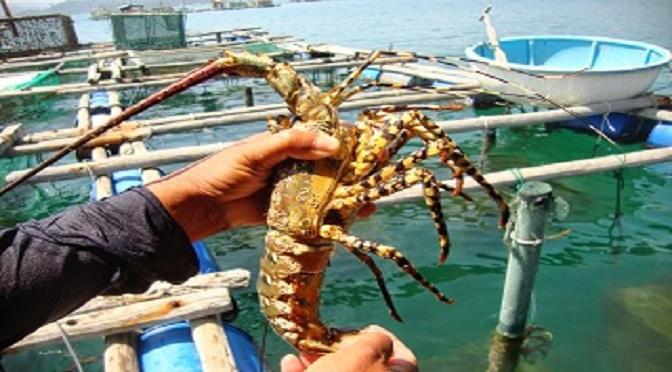 Вьетнам восстанавливает креветочное производство