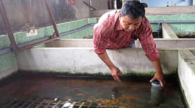 Tăng năng suất lươn nuôi bằng giải pháp phòng bệnh hiệu quả