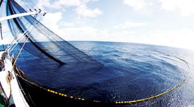 Quy trình khai thác cá ngừ đại dương giống bằng lưới vây