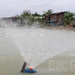 Chăn nuôi thủy sản an toàn