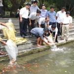 Sản xuất, ương, nuôi thành công cá chép Koi tại Ninh Bình