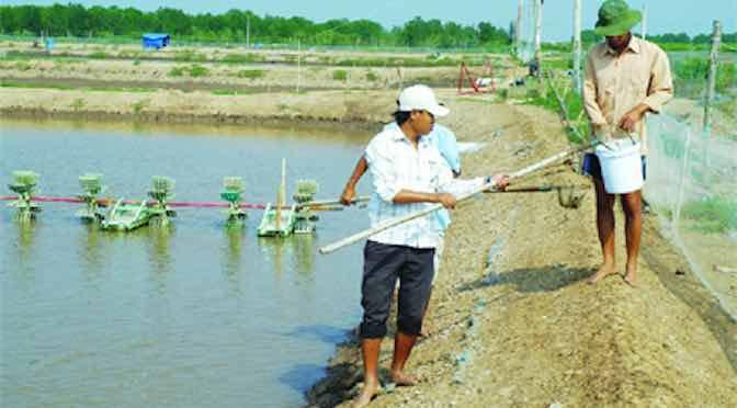 Bổ sung khoáng chất cho động vật thủy sản