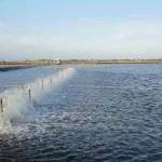 Sử dụng chế phẩm sinh học – giải pháp nuôi tôm bền vững