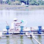 Các bước đơn giản để nuôi thủy sản sạch