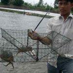 Hiệu quả từ mô hình tôm – cua sinh thái an toàn sinh học