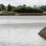Triển vọng nghề nuôi cá kèo