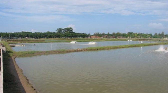 Sự cần thiết sử dụng Vitamin C trong nuôi trồng thủy sản